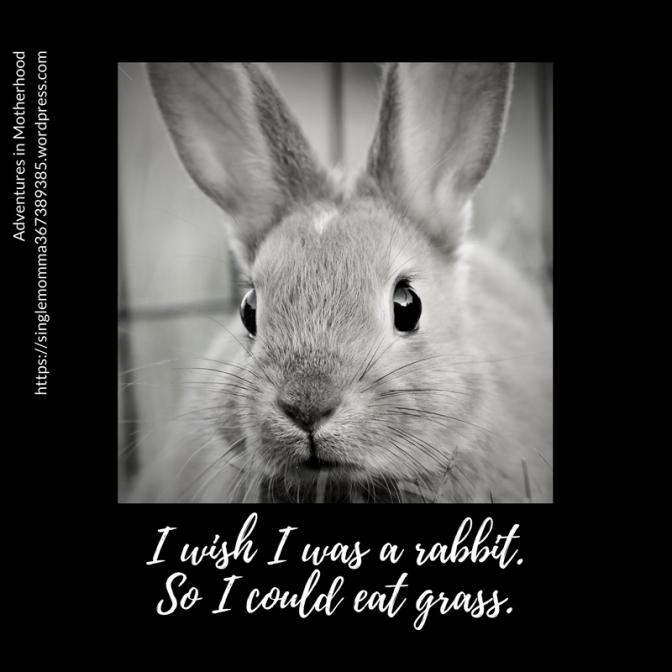 I wish I was a rabbit.